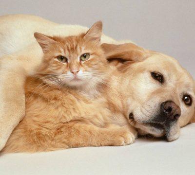 mascotas perros gatos que alimentos no hay que darles comida prohibida fiestas patrias dieciocho fin de semana largo despues de una