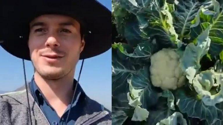 brocoli viral coliflor video chupalla gorro negro sombrero campo hortaliza verdura carreta poncho sur de chile norte