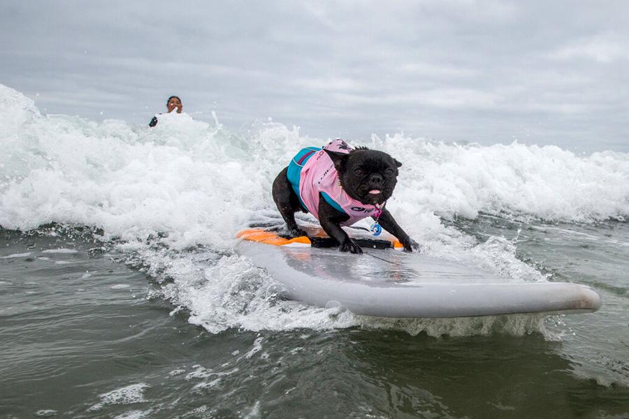 Surf1 27092021