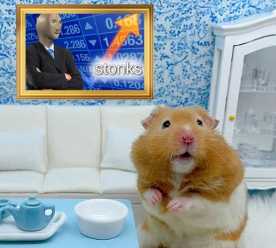 señor goxx hamster se hace viral por invertir en criptomonedas emprendedor animal cuye roedor raton capital mr.