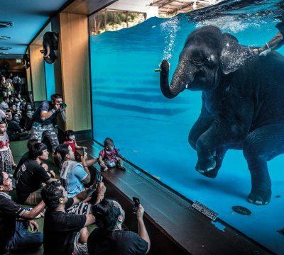 Adam Oswell Wildlife Photographer Of The Year