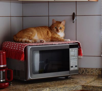 Getty Cat Lying On Microwave