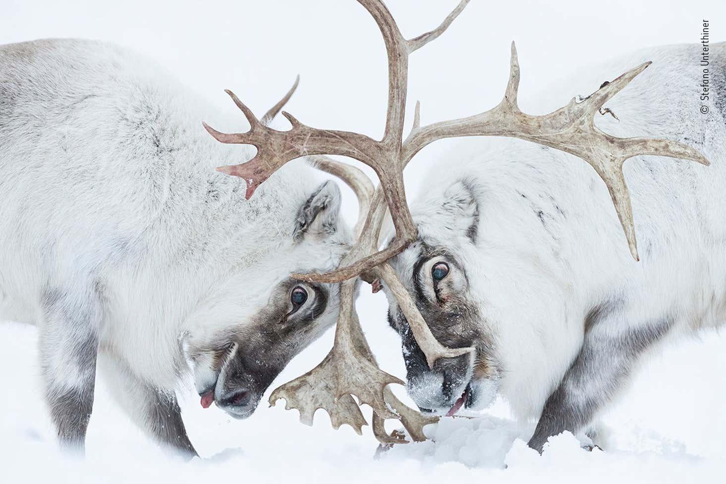 Stefano Unterthiner Wildlife Photographer Of The Year