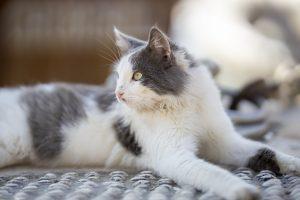 Cat G6e9a7f616_1280